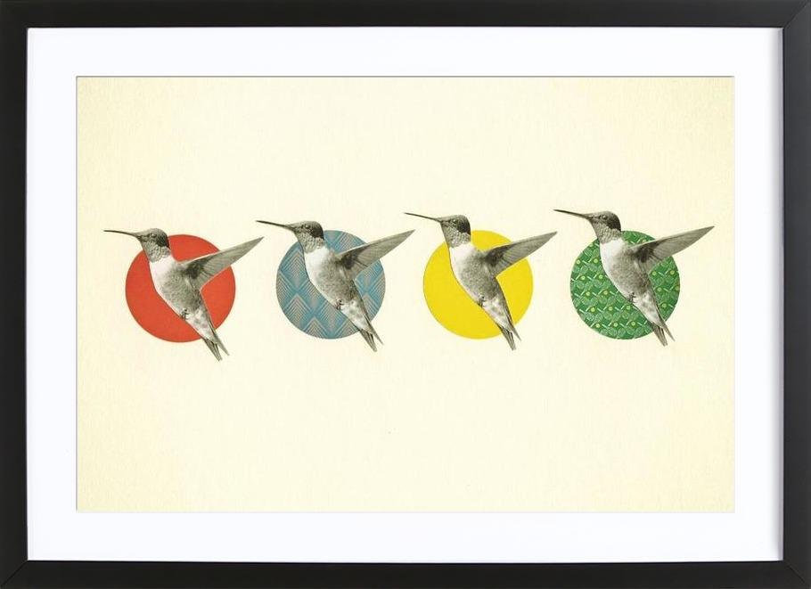 The hummingbird dance ingelijste print