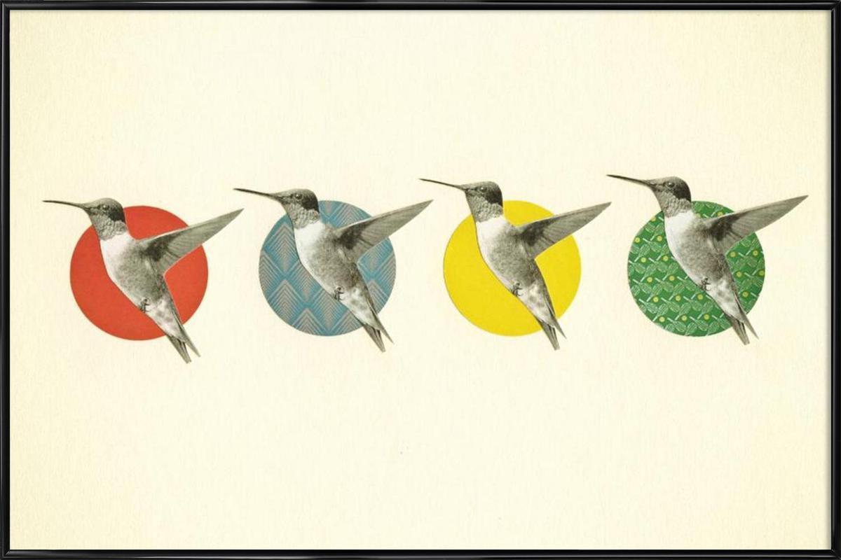 The hummingbird dance ingelijste poster