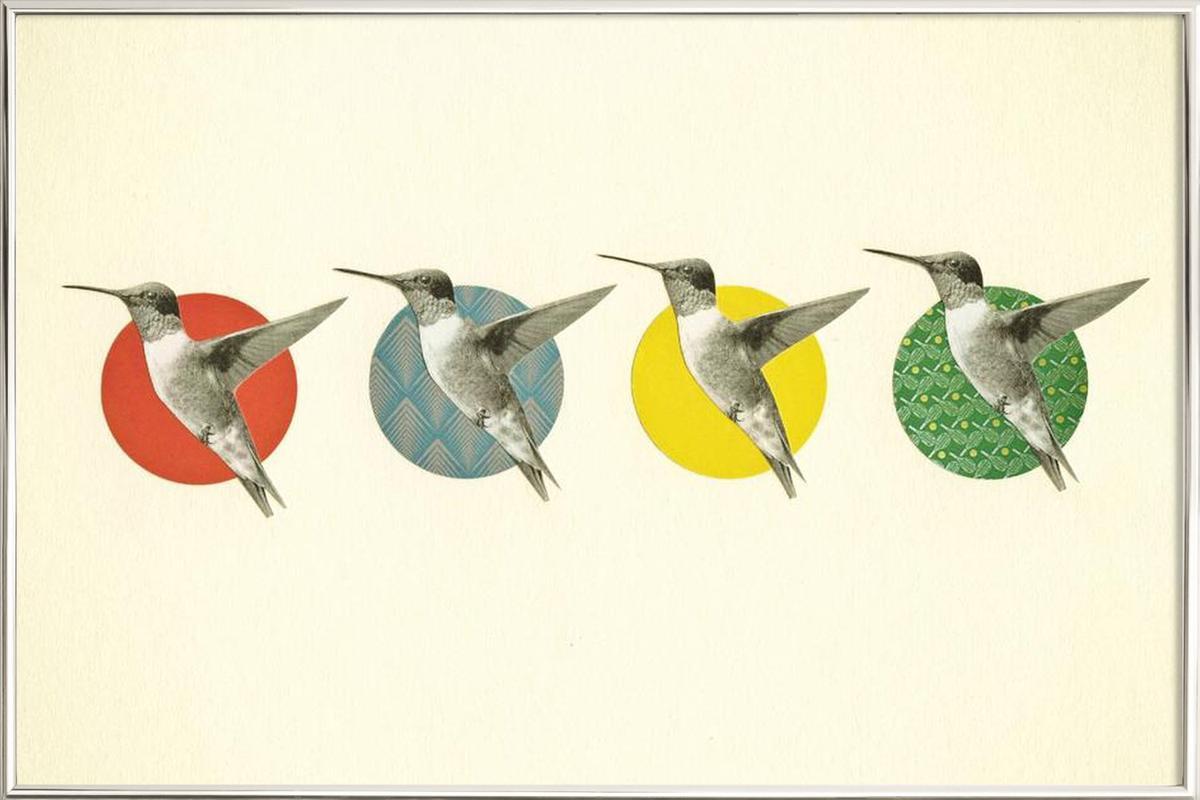 The hummingbird dance poster in aluminium lijst