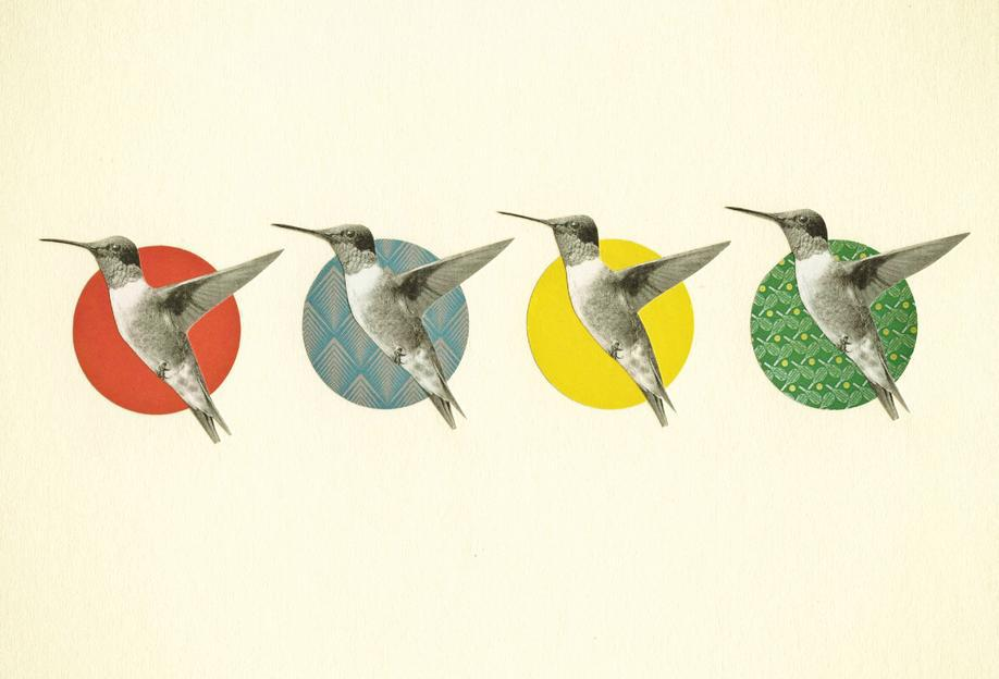 The hummingbird dance -Acrylglasbild