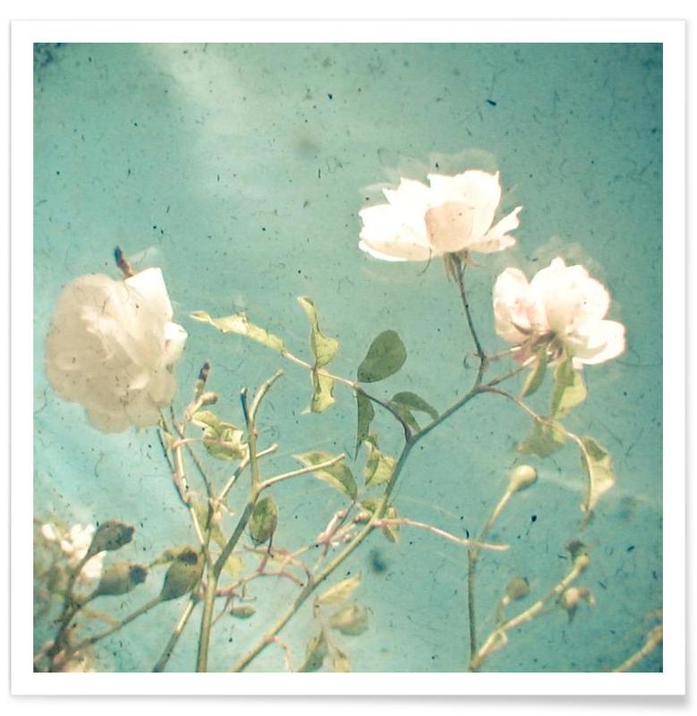 White rose -Poster