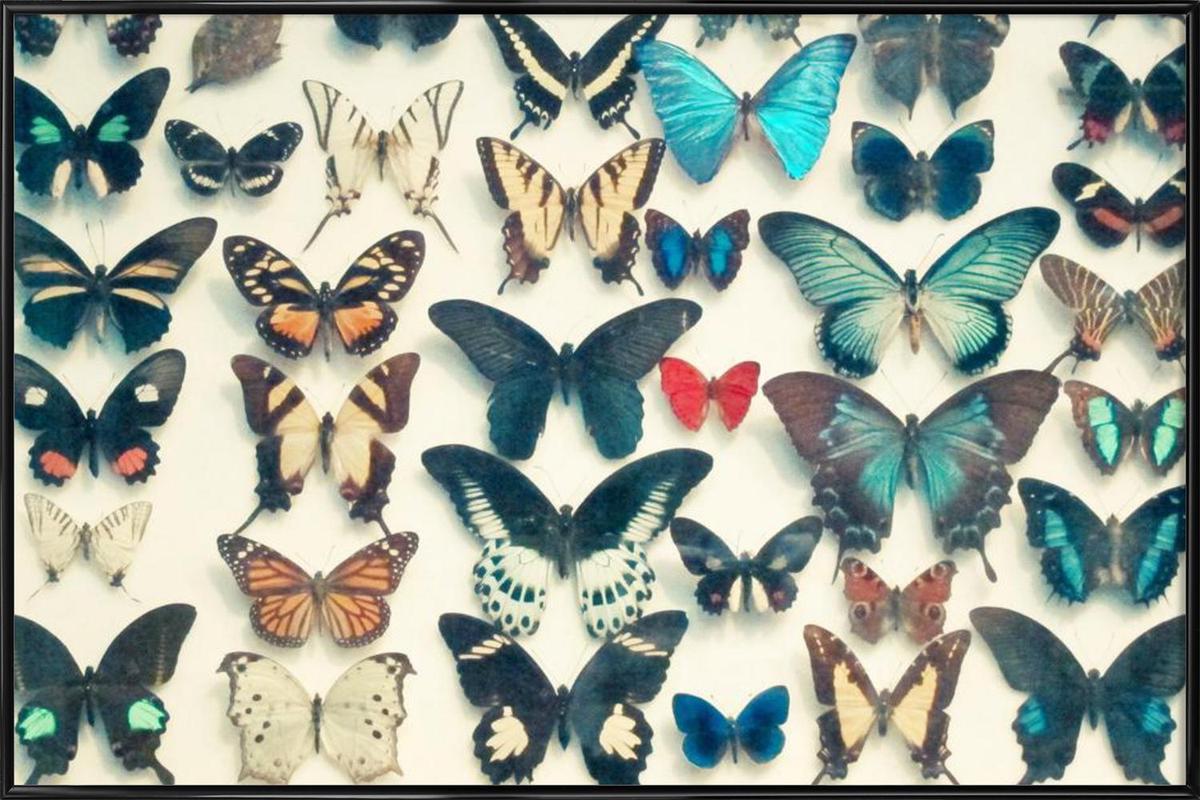 Wings -Bild mit Kunststoffrahmen