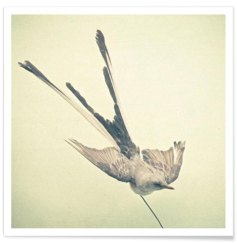 Bird study #1 -Poster