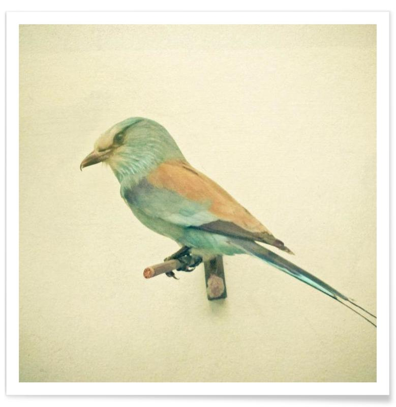 Bird study #2 affiche
