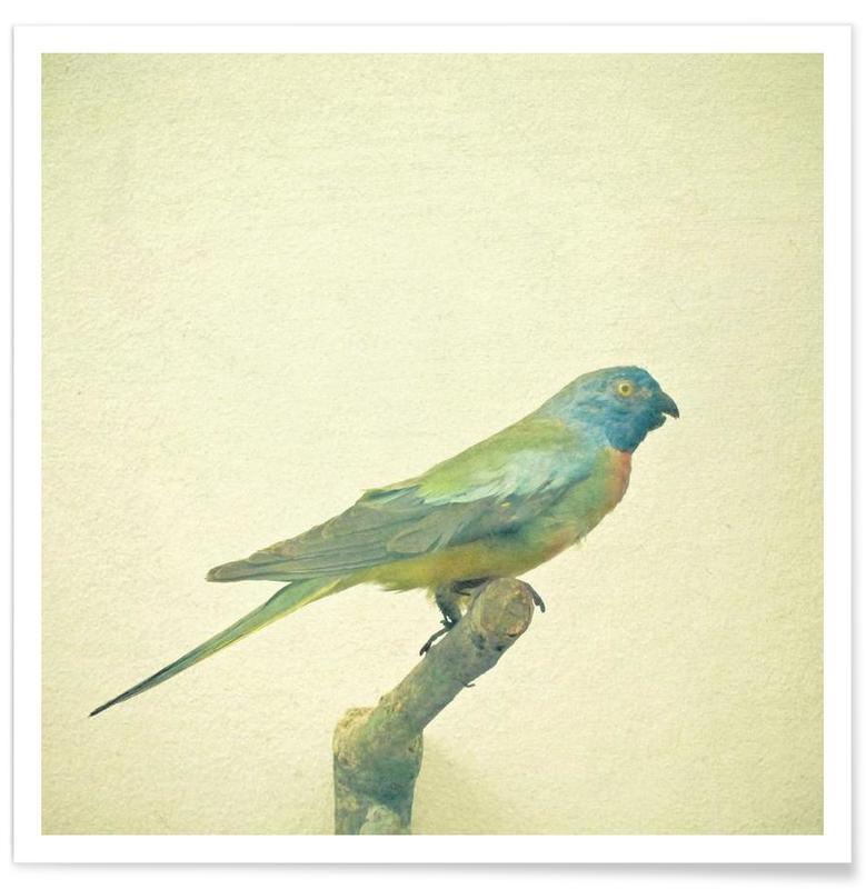 Bird study #3 Poster