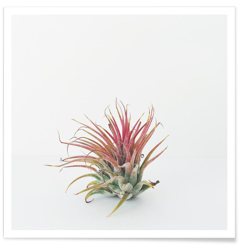 Air Plant Poster