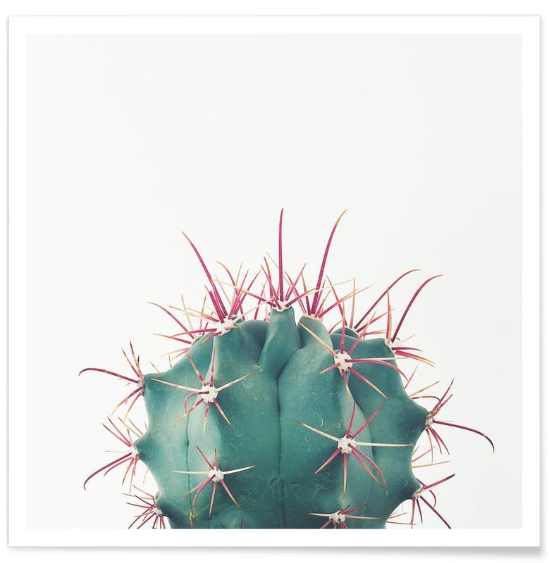 Kaktus, Ferocactus -Poster