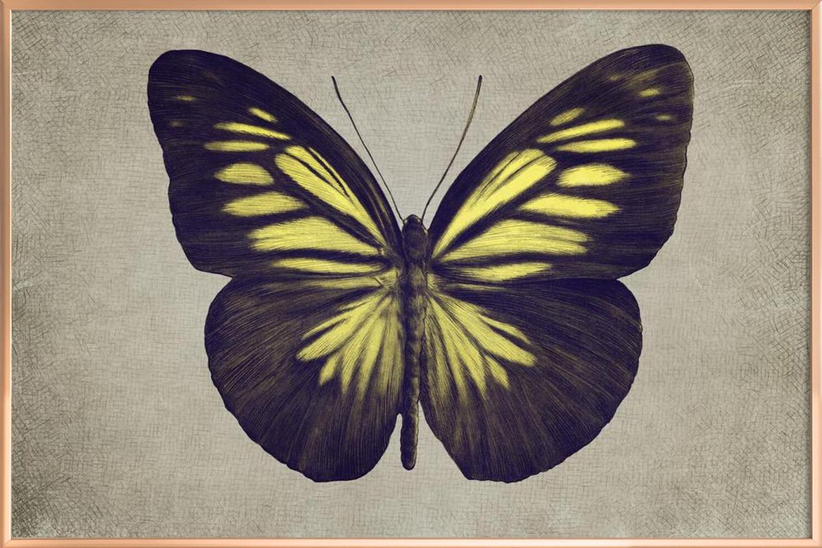Papillon (yellow) Poster in Aluminium Frame