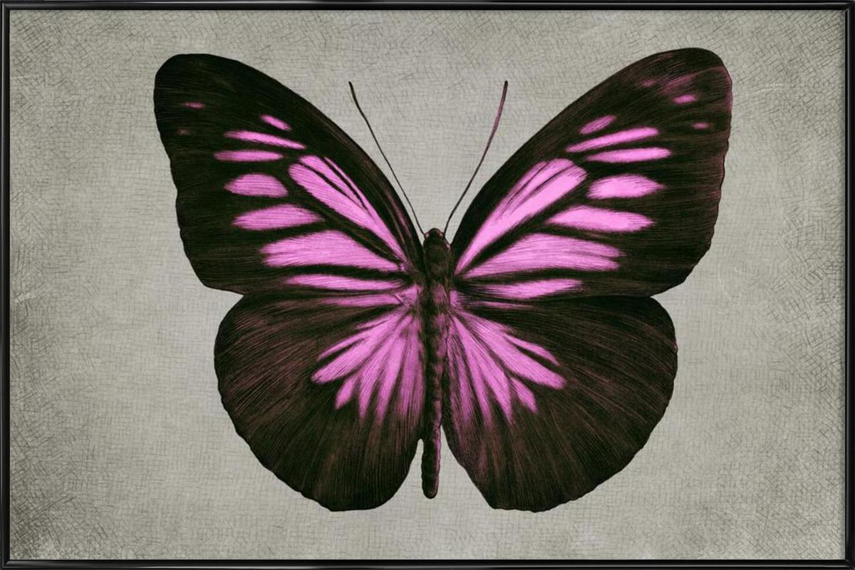 Papillon (pink) affiche encadrée