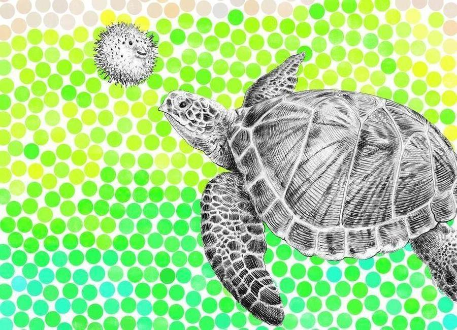 Turtle and Pufferfish Canvas Print