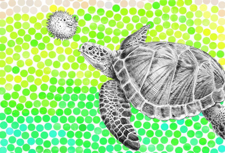 Turtle and Pufferfish Acrylic Print