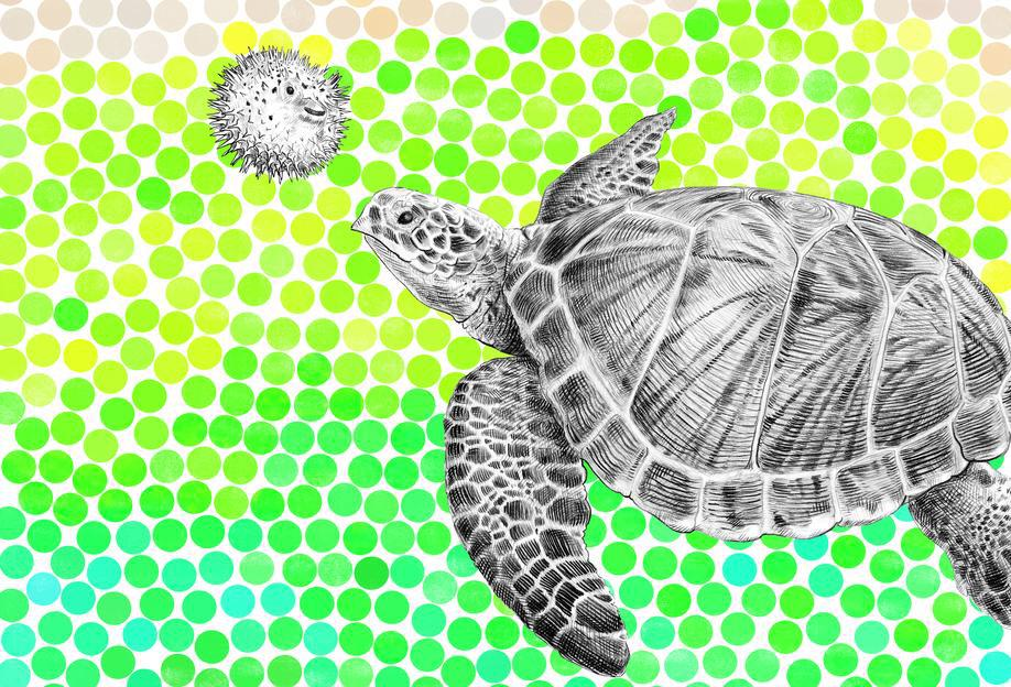 Turtle and Pufferfish Aluminium Print