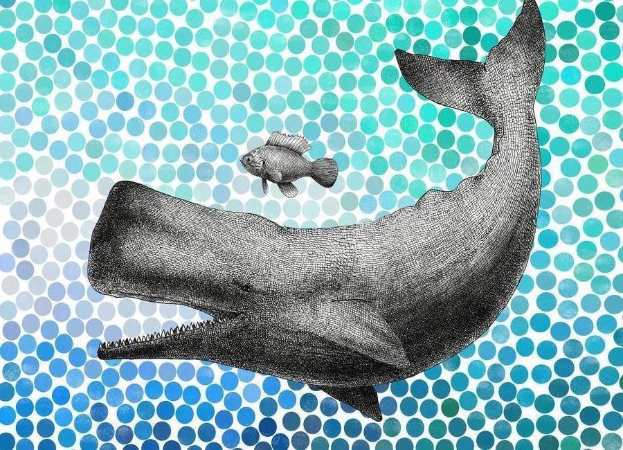 Whale and Fish -Leinwandbild