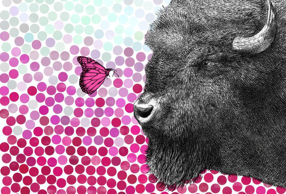 Bison and Butterfly Aluminium Print