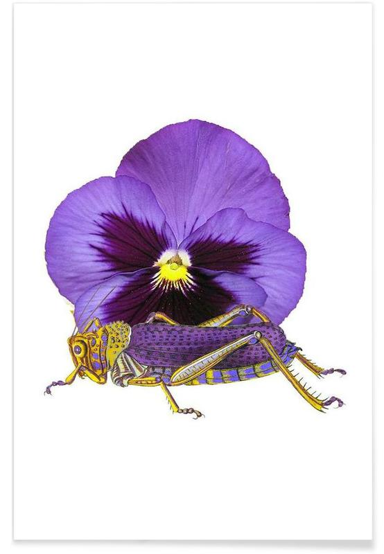 Sauterelles, Purple Grasshopper and Viola affiche