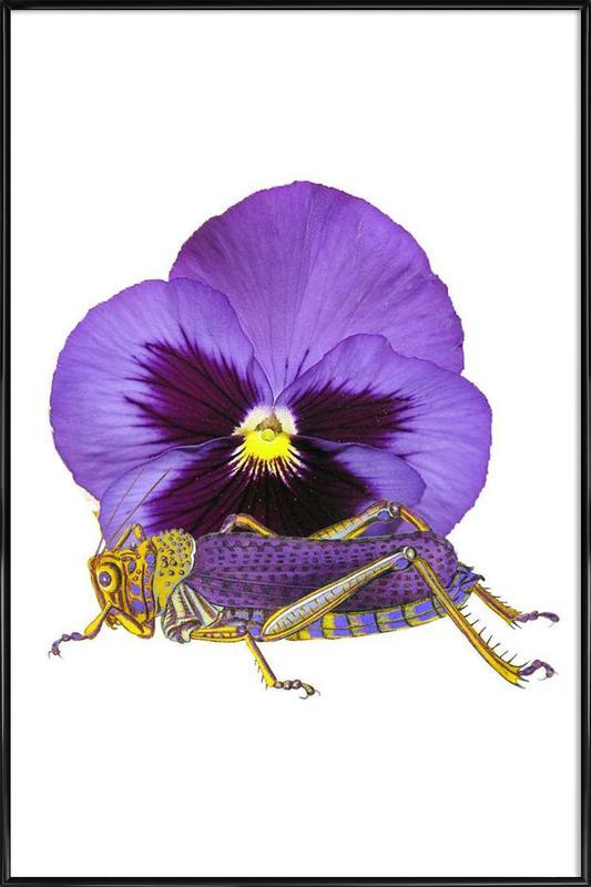 Purple Grasshopper and Viola affiche encadrée