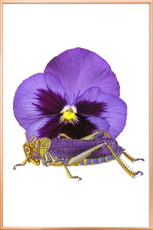 Purple Grasshopper and Viola Poster in Aluminium Frame
