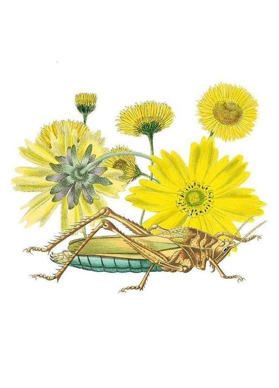 Yellow Flowers and Grasshopper canvas doek