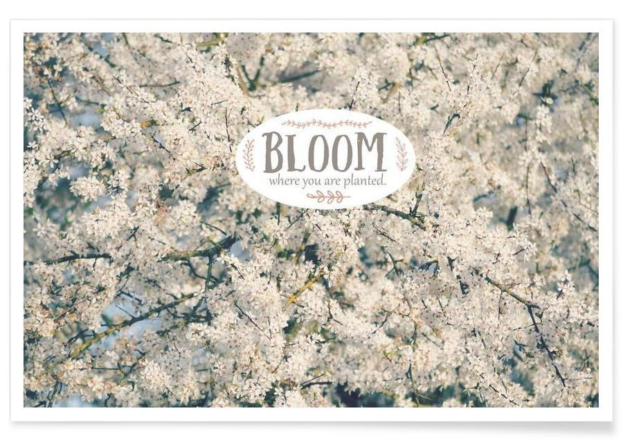 , Bloom Where affiche
