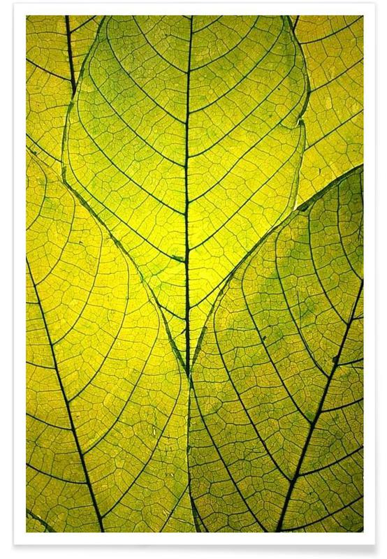 Leaves & Plants, Every Leaf A Flower Poster