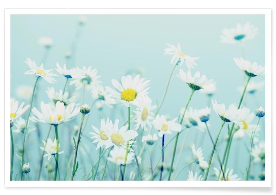 Gänseblümchen, Dancing Daisies -Poster