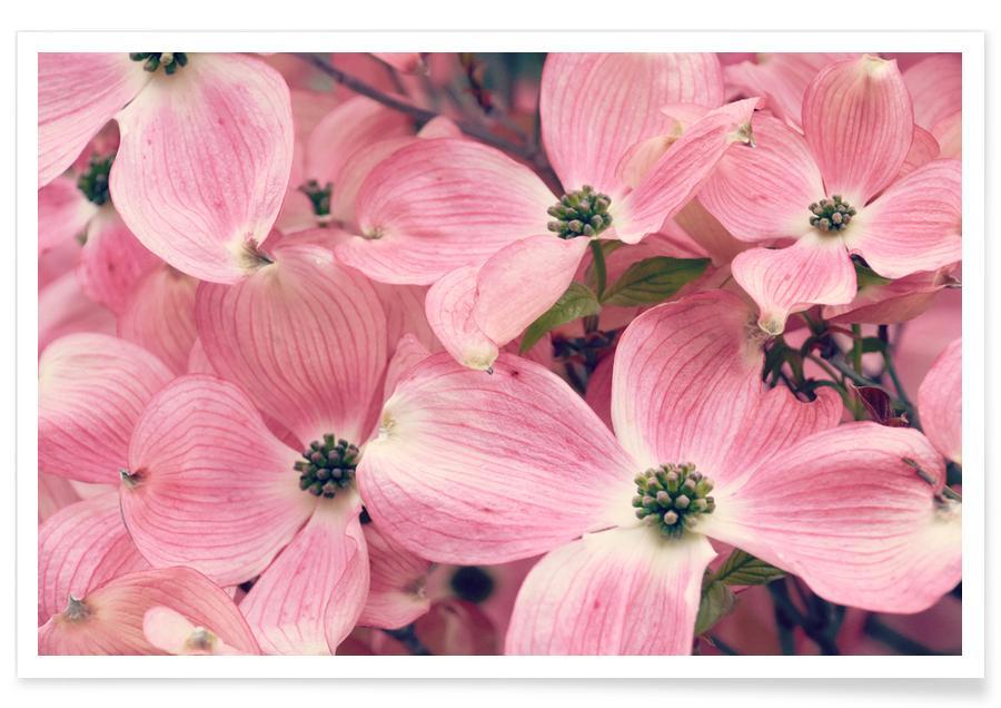 Pink affiche